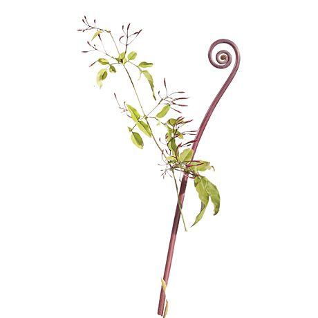 Red fiddlehead fern and jasmine stem