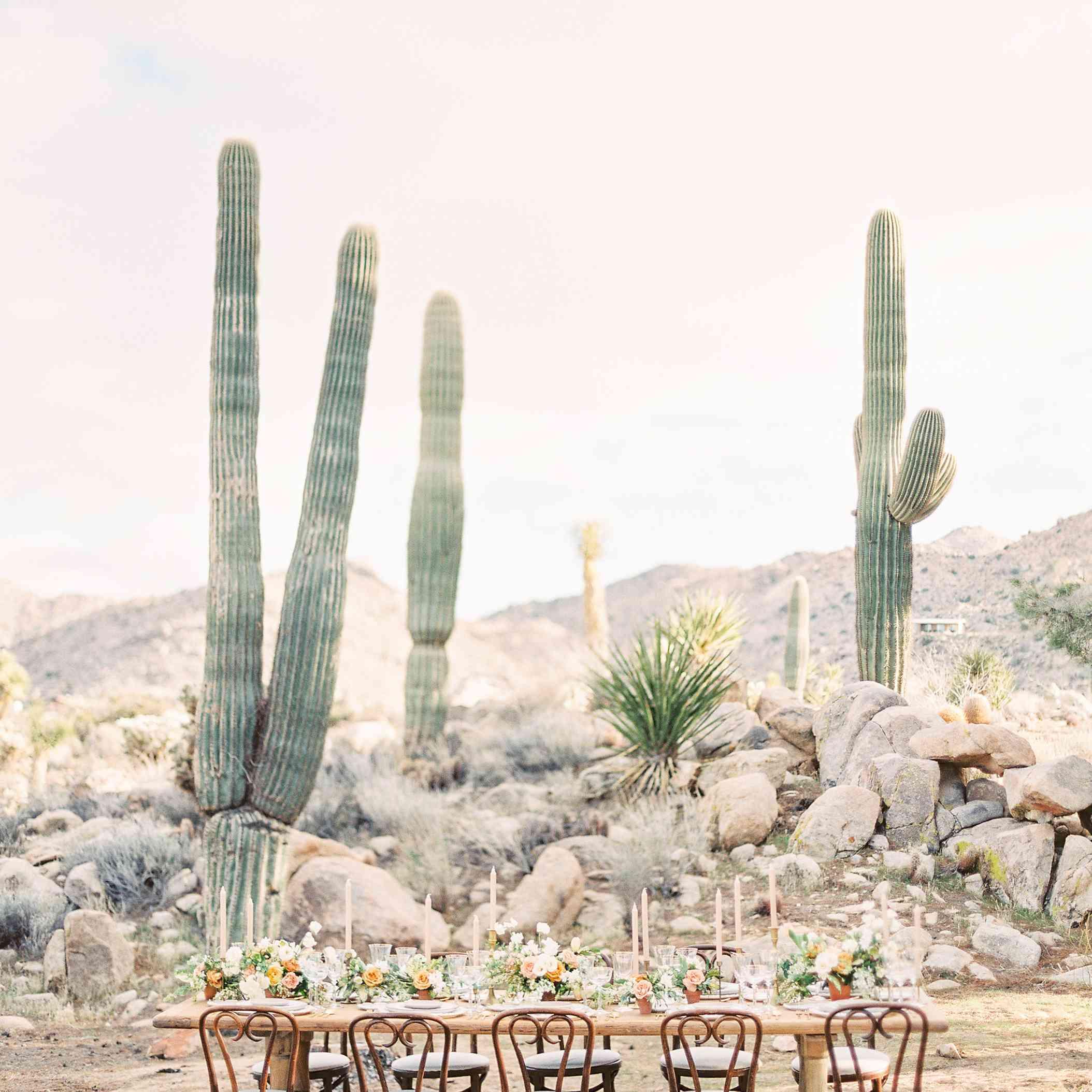 Desert Reception Venue with Cacti