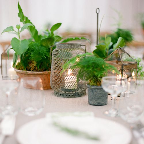 Small Outdoor Wedding Ideas On A Budget: Wedding Centerpiece Idea We Love: Potted Plants