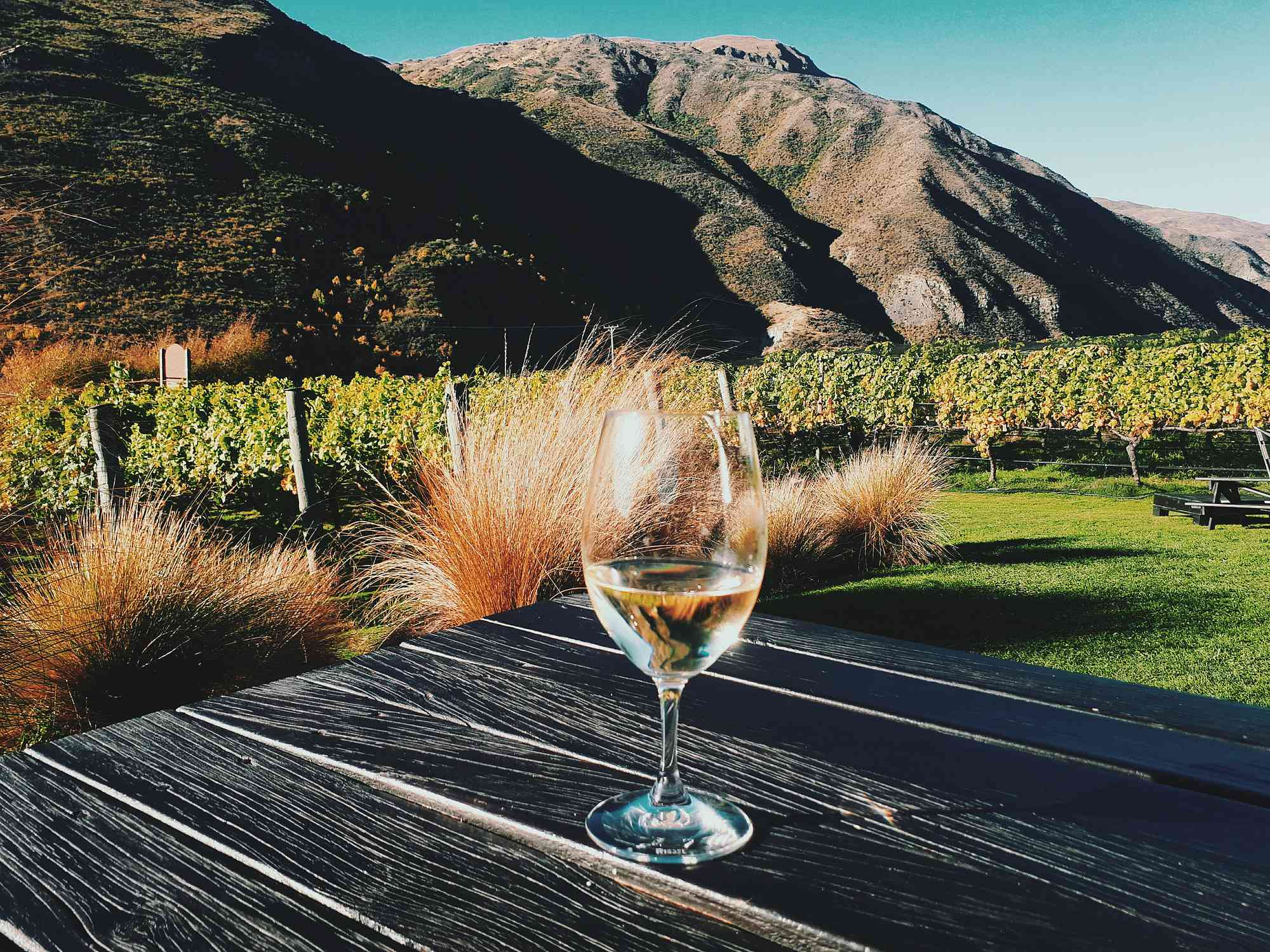 Glass of wine with picturesque vineyard in background