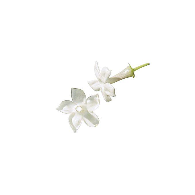 White stephanotis flowers
