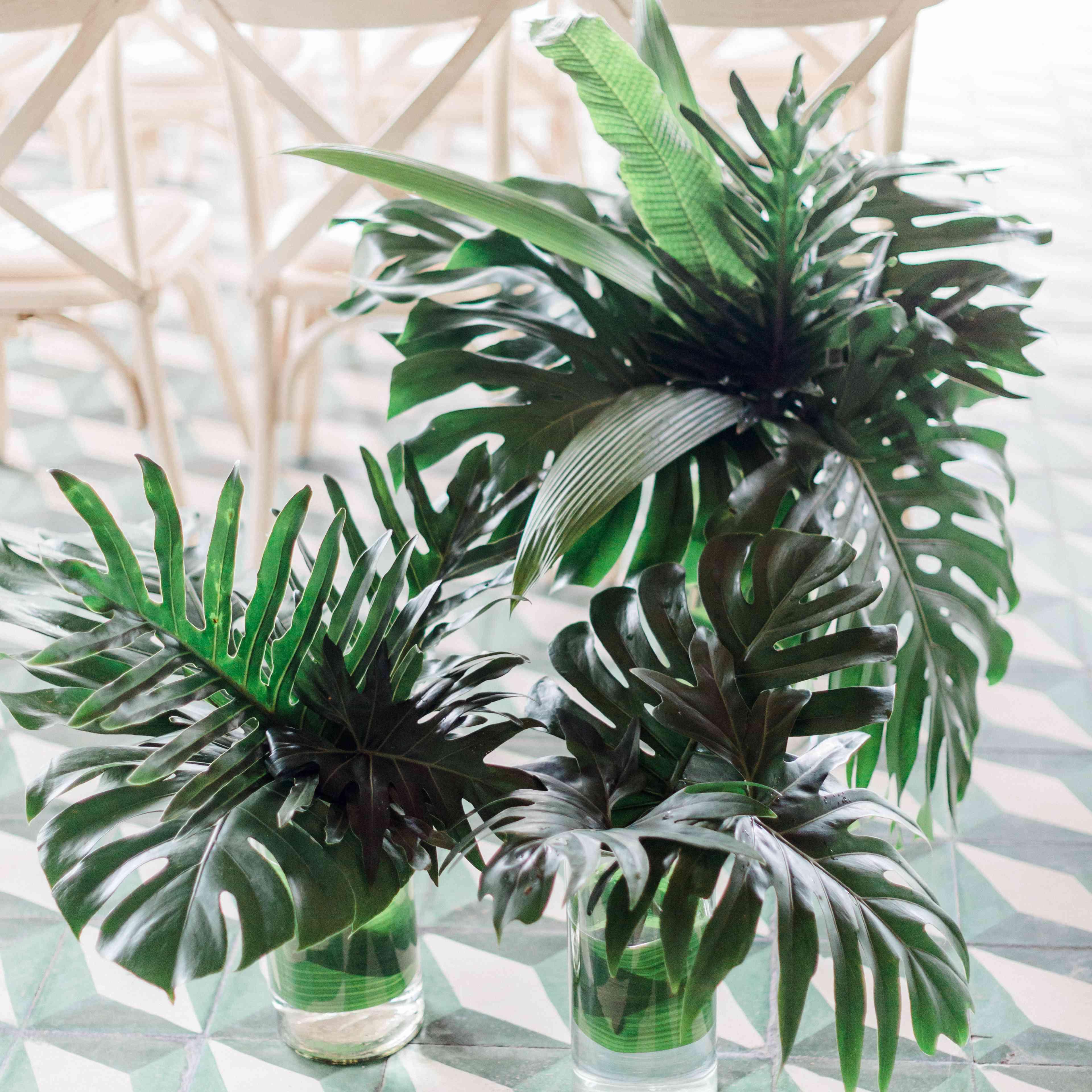 Monstera leaf arrangements