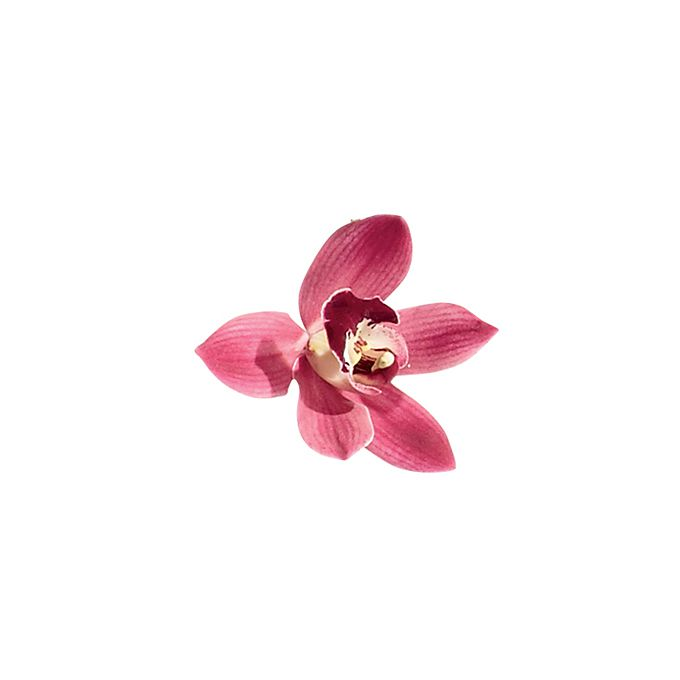Pink mini cymbidium flower