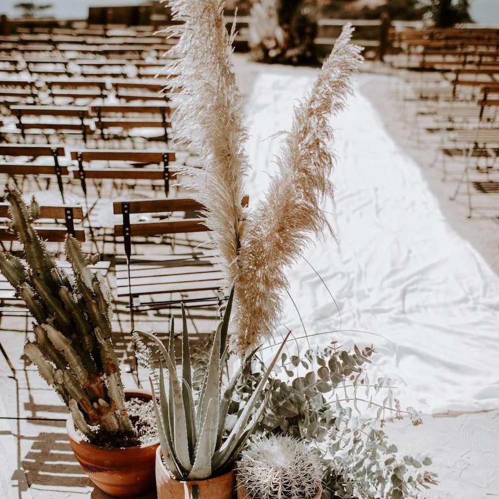 Cactus decorations