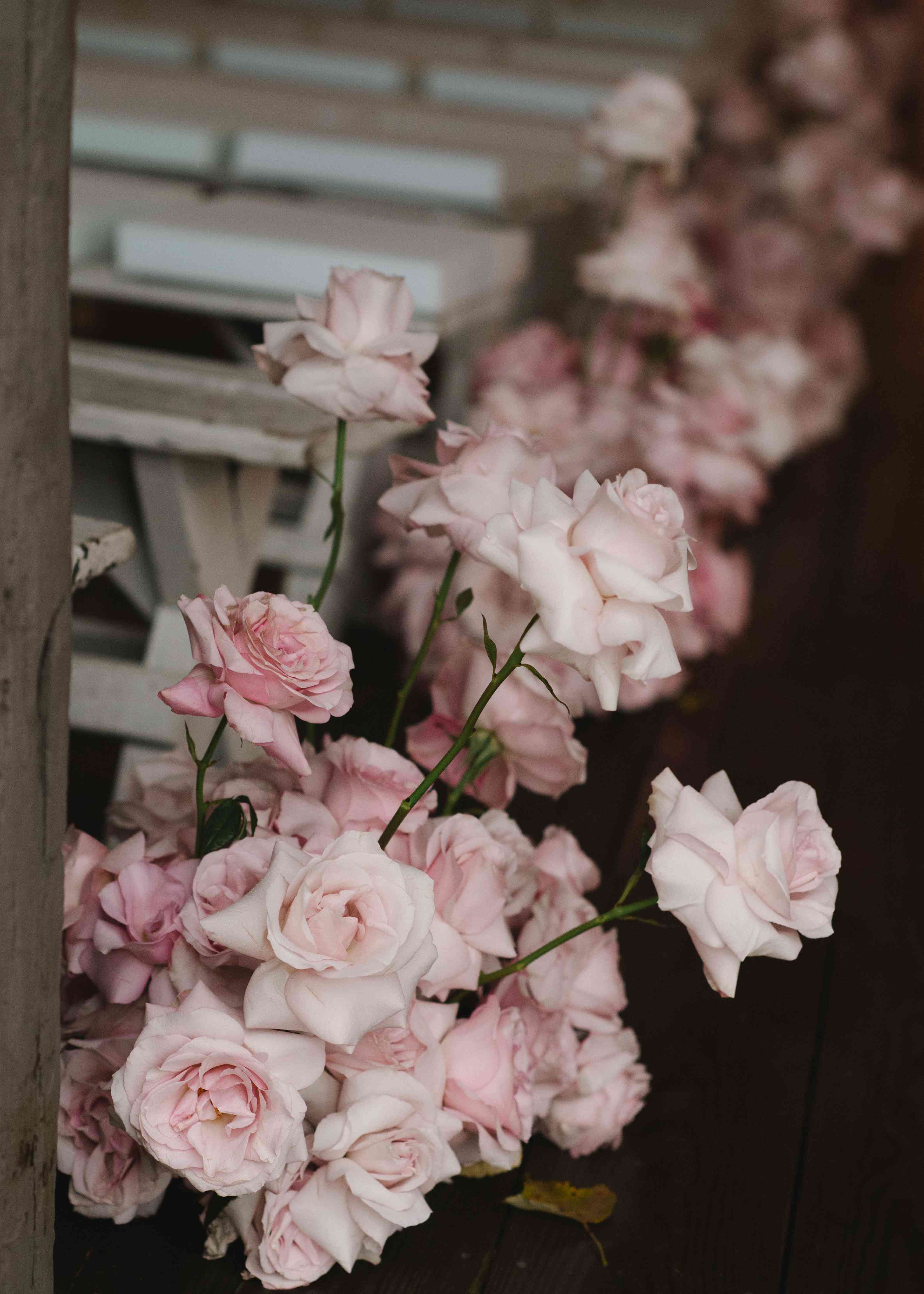 pink roses aisle