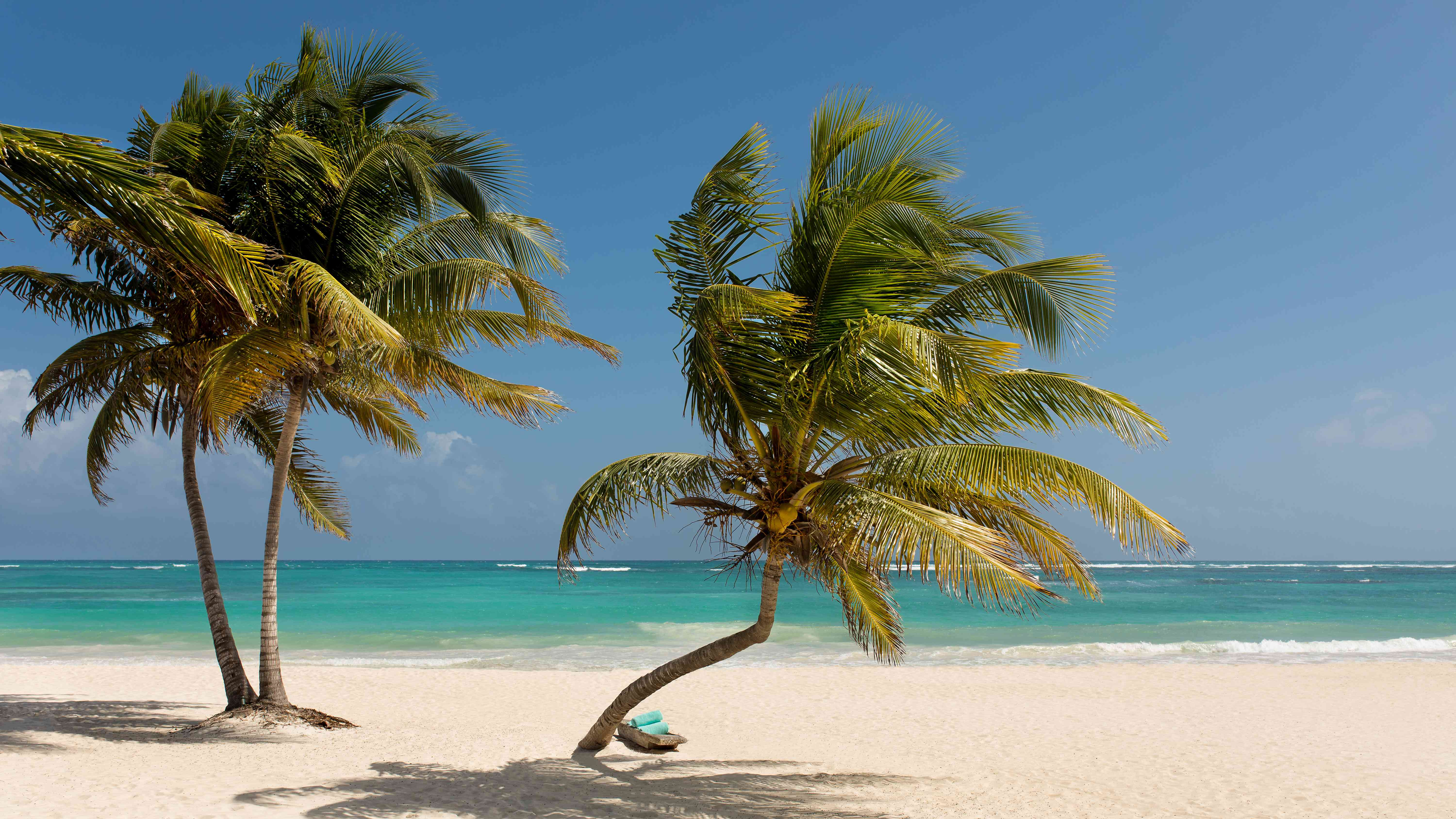 Two palm trees on a beach