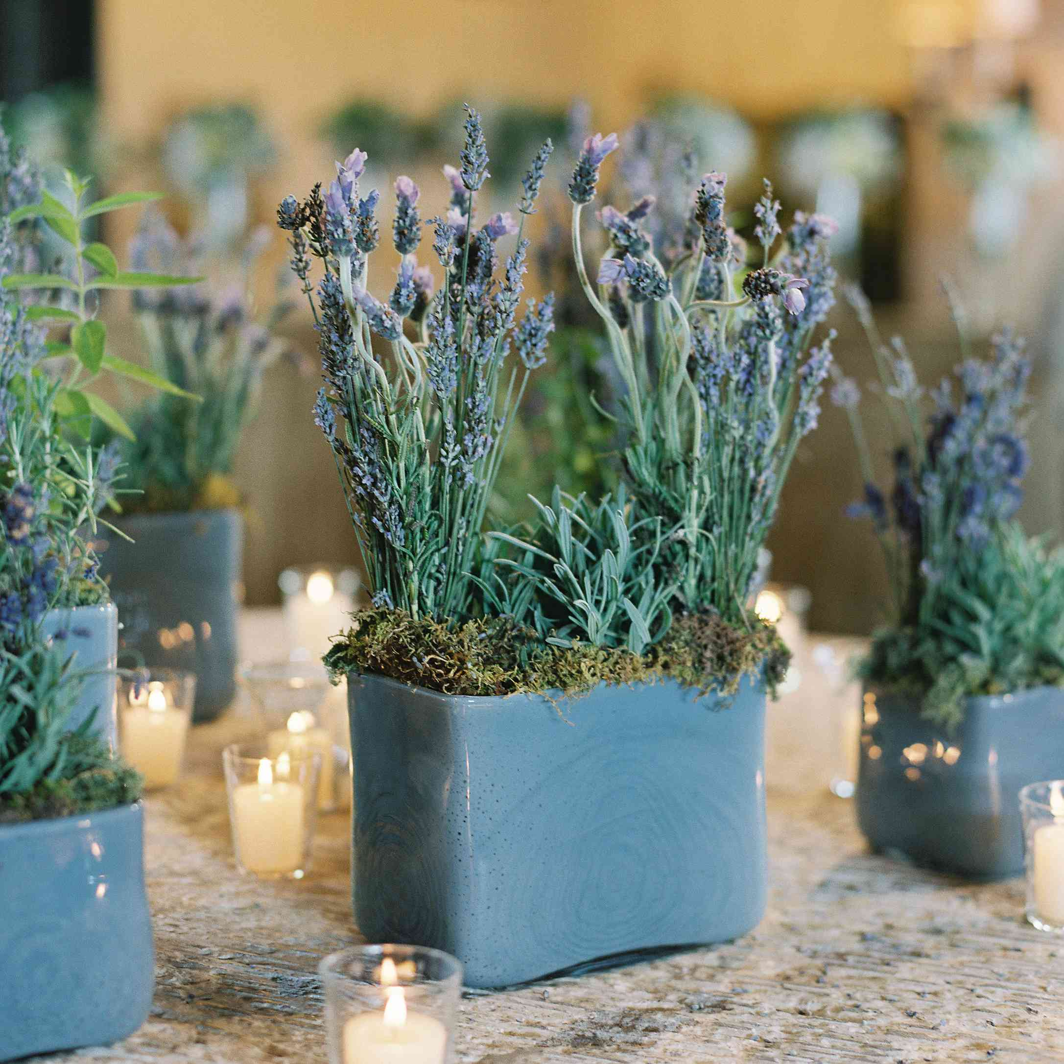 <p>lavender</p>