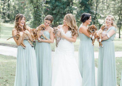 <p>Bridesmaids Holding Puppies</p>