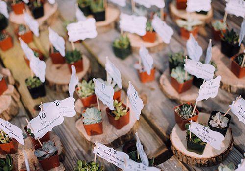 wedding succulent escort cards