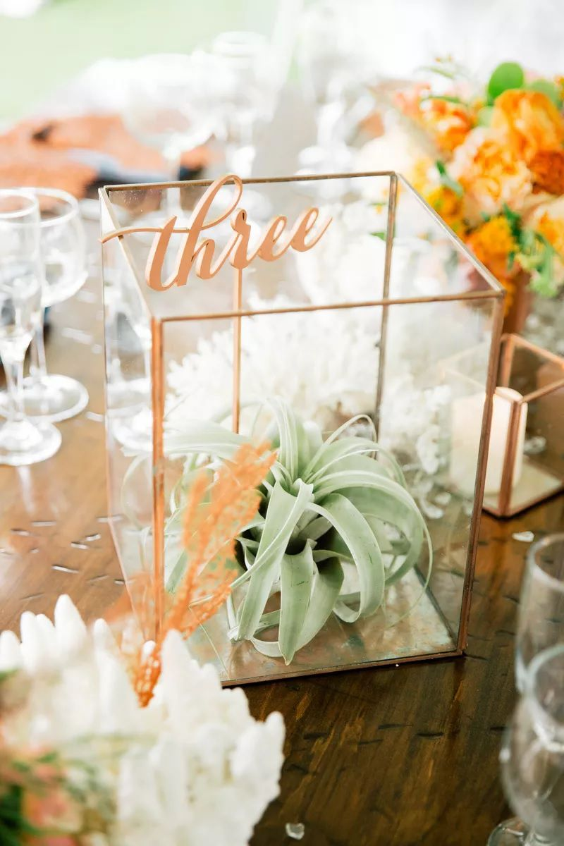 Table number in a terrarium