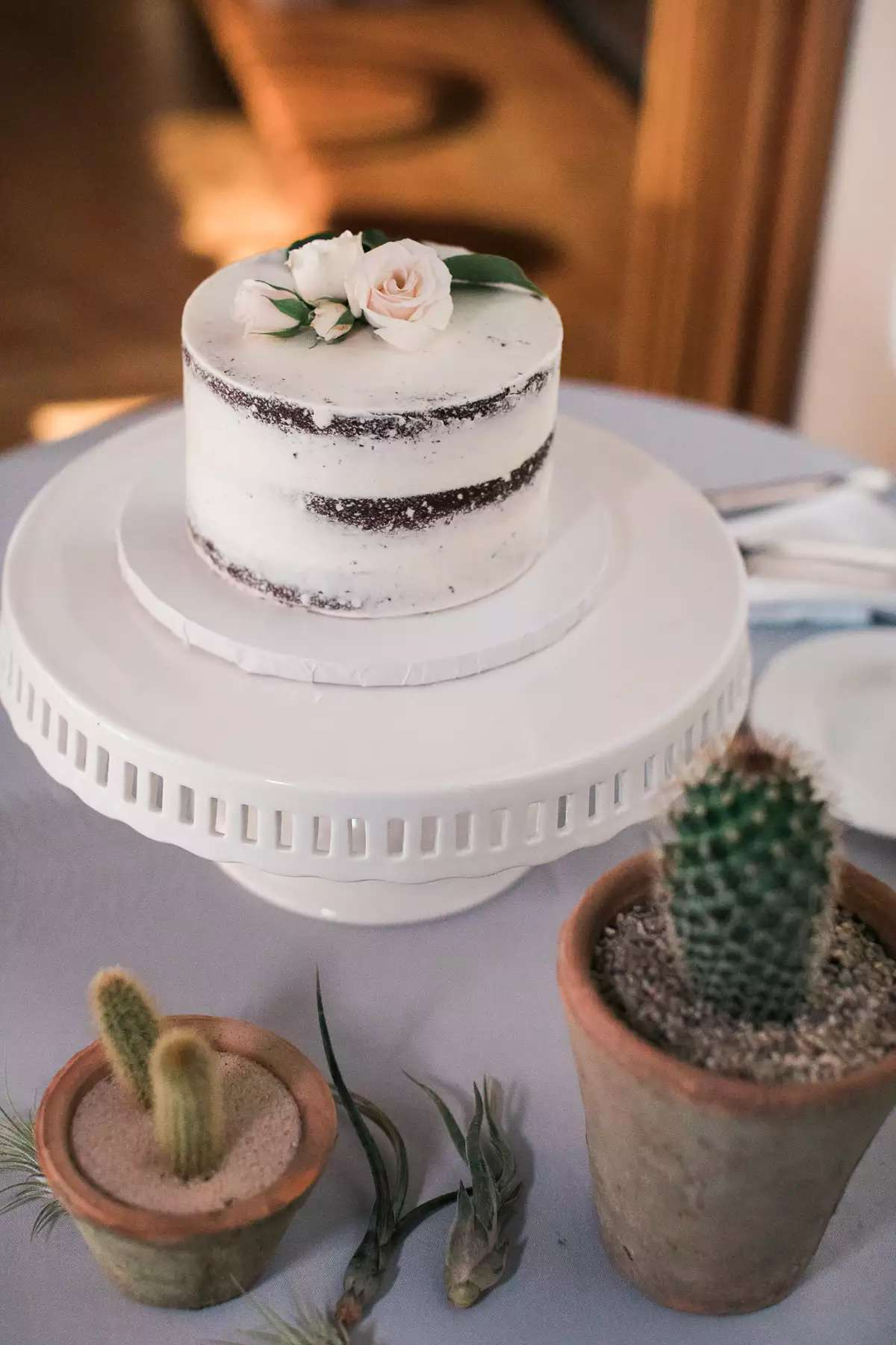 single tier chocolate cake with potted cacti