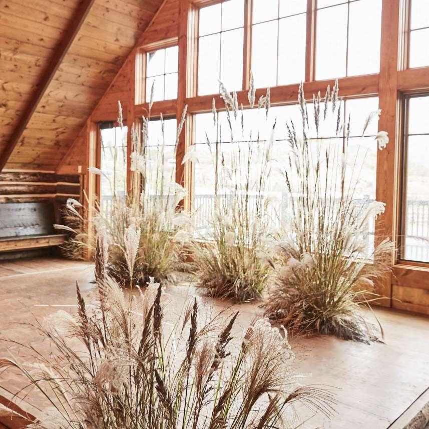 Wild grasses at venue