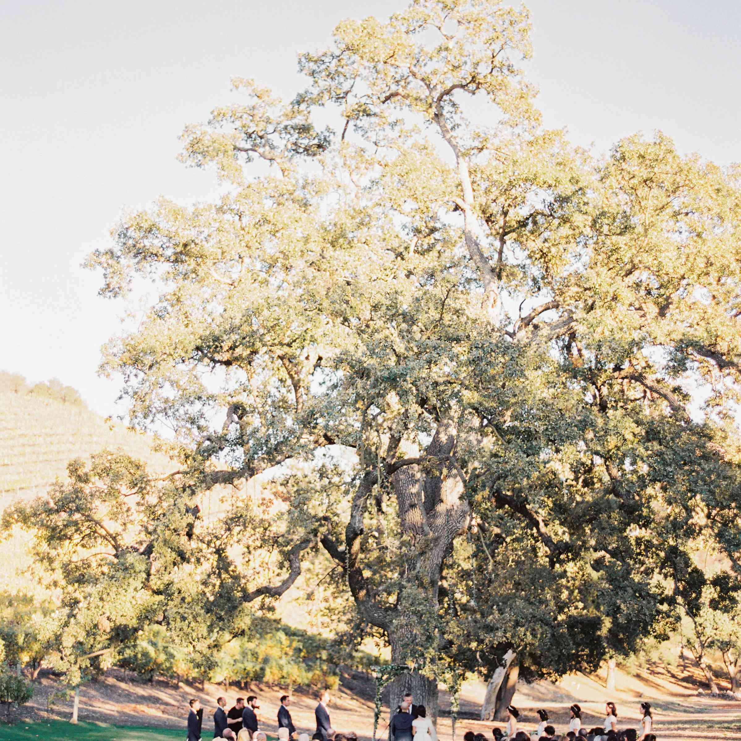 Wedding Ceremony Under Grand Tree