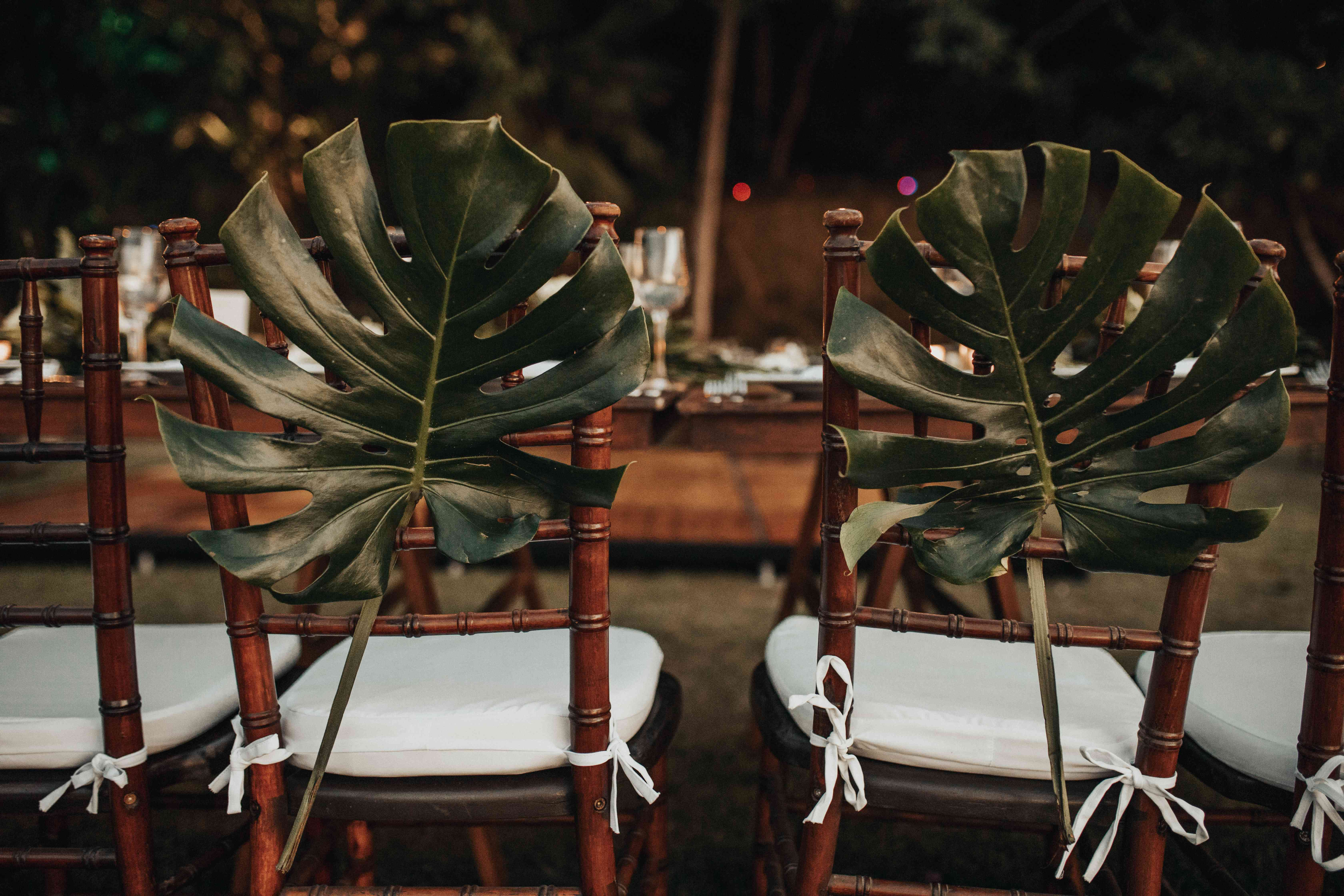 <p>Monstera leaves on chairs</p><br><br>
