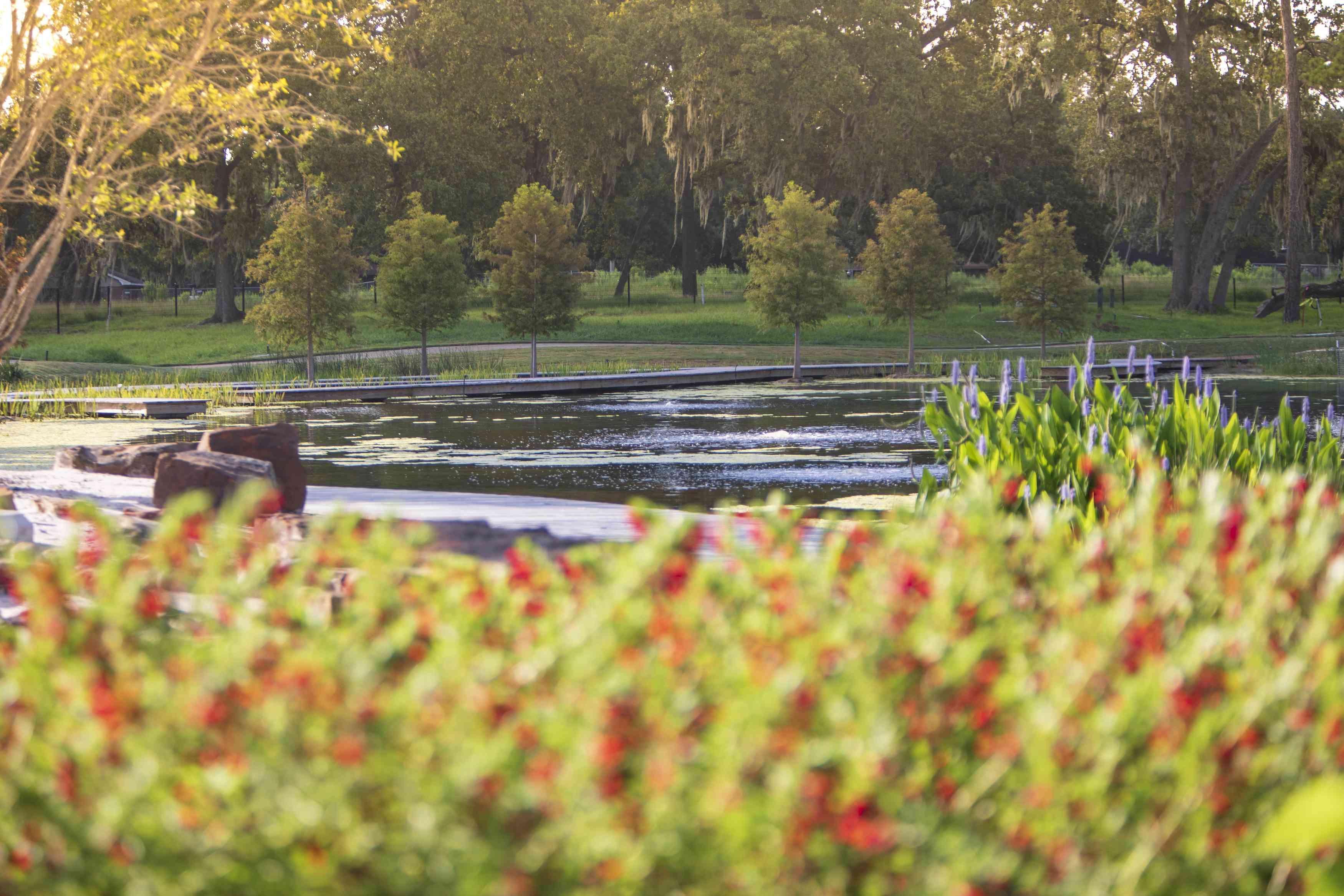 View of the pond at Houston Botanic Garden
