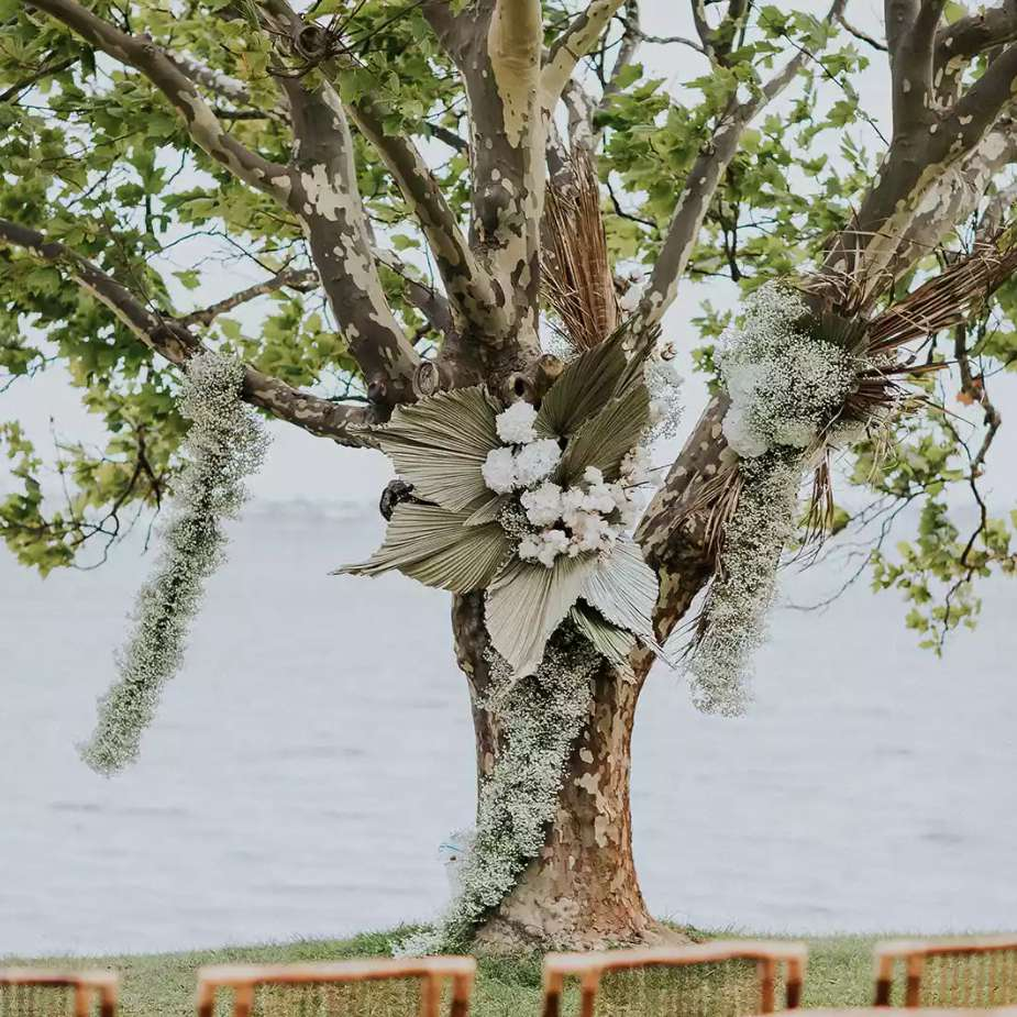 Wedding ceremony tree adorned with baby's breath and dried palm leaves