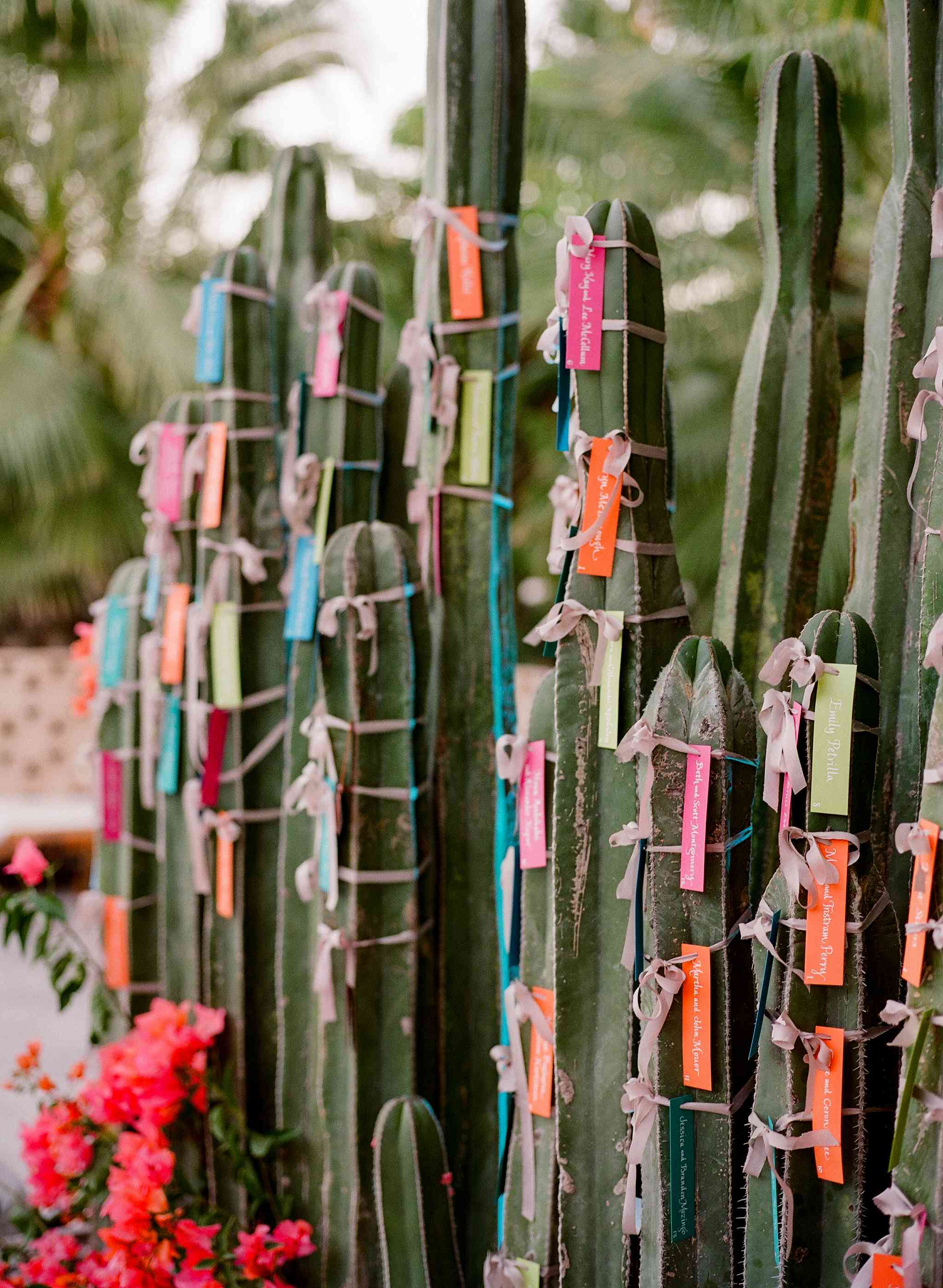 Colorful escort cards hung on cacti
