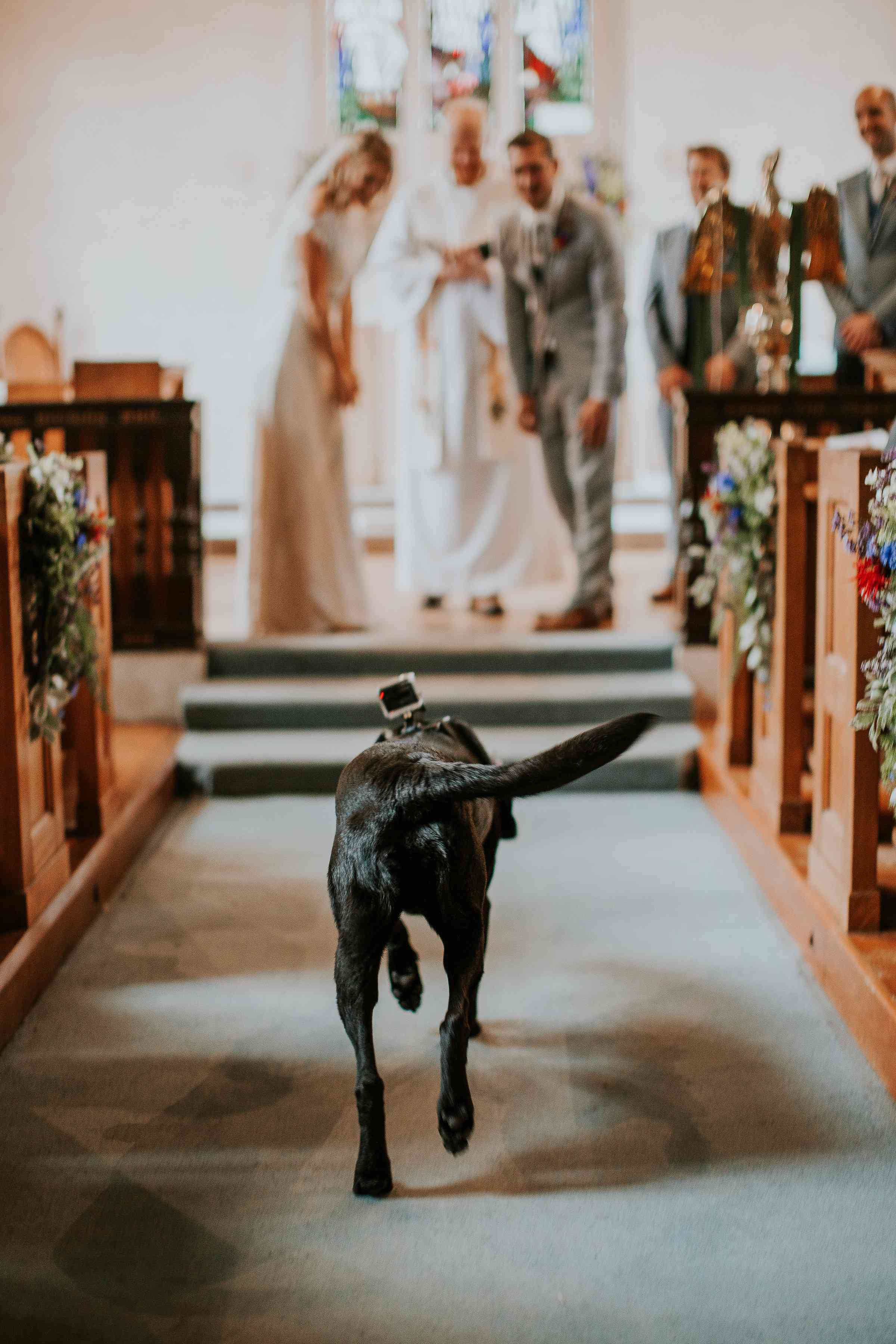 Dog walking down aisle with GoPro