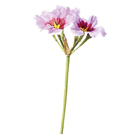 Leococoryne blooms