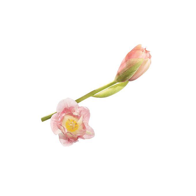 Blush-toned double tulips