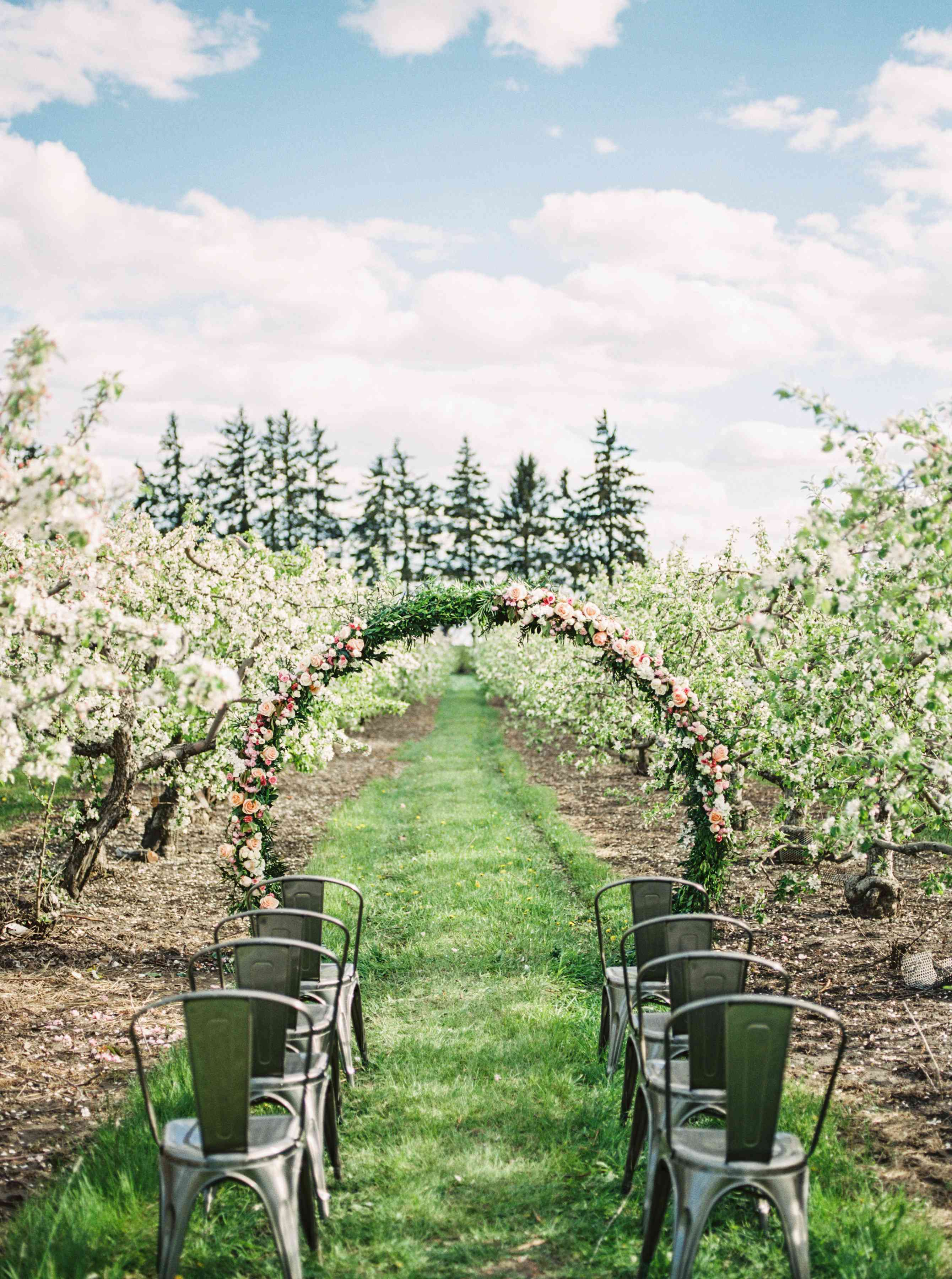 Wedding ceremony in an apple orchard
