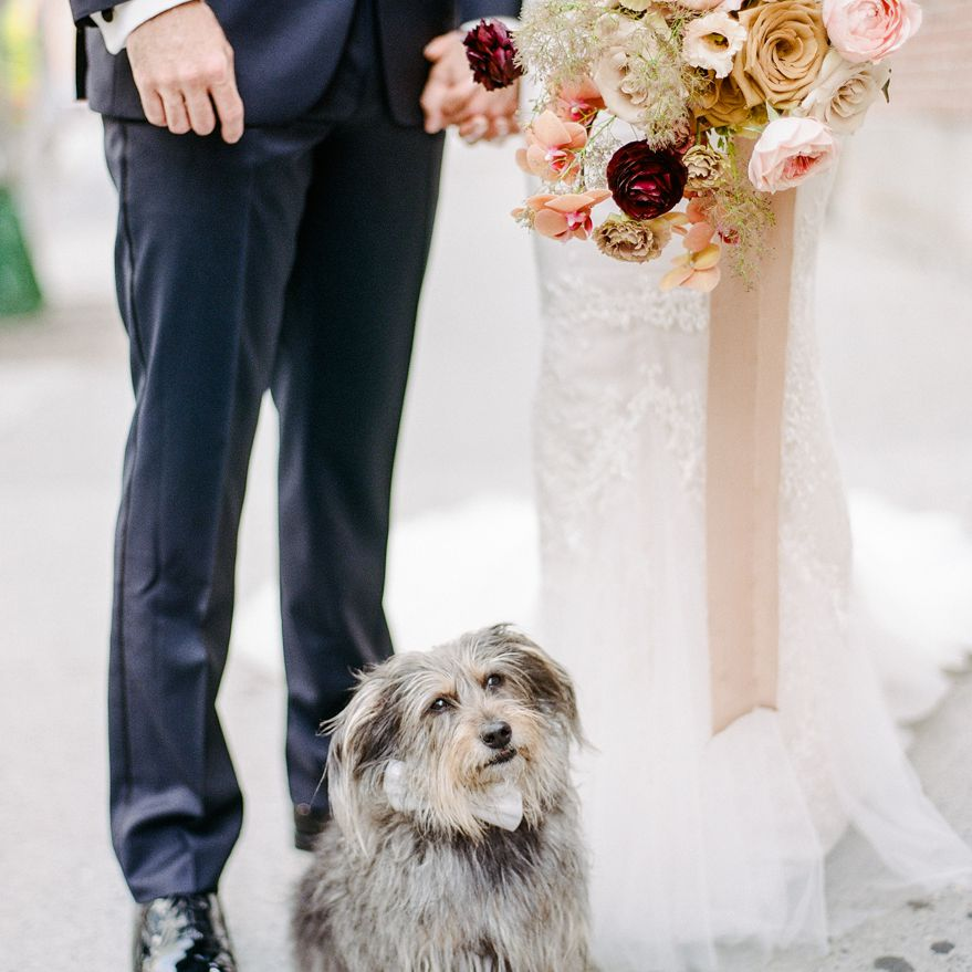 <p>Dog with bride and groom</p><br><br>
