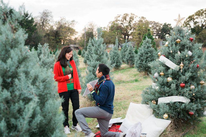 Christmas tree lot proposal