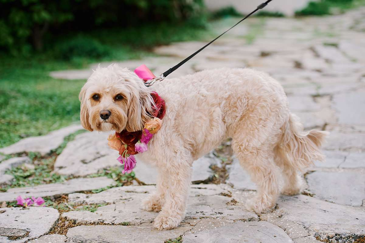 Dog in floral collar