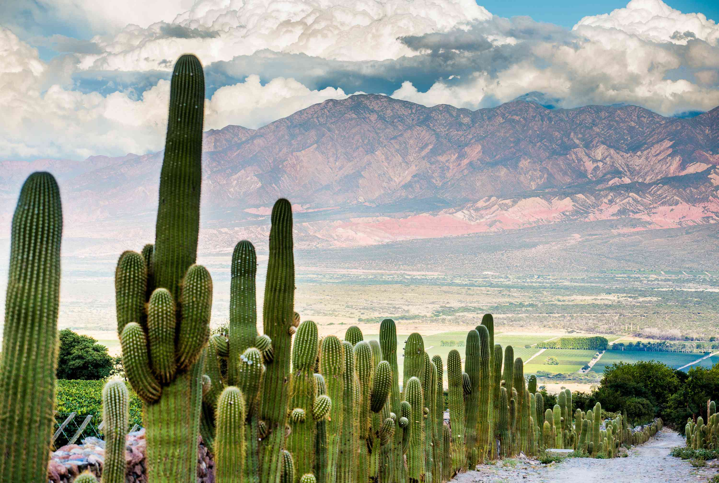 landscape photo with cacti and mountains