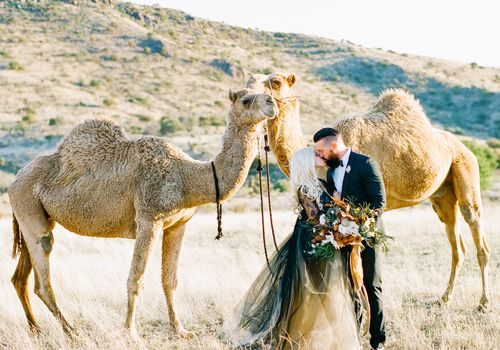 Bride and groom with camels