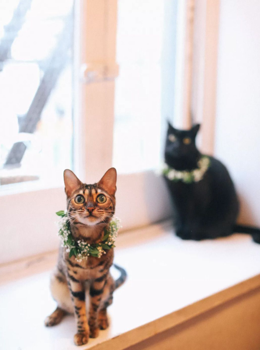 Cats with garland collars sitting on window