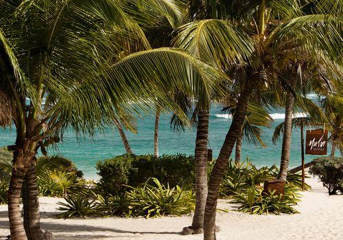 Palm treas on a beach in Mexico