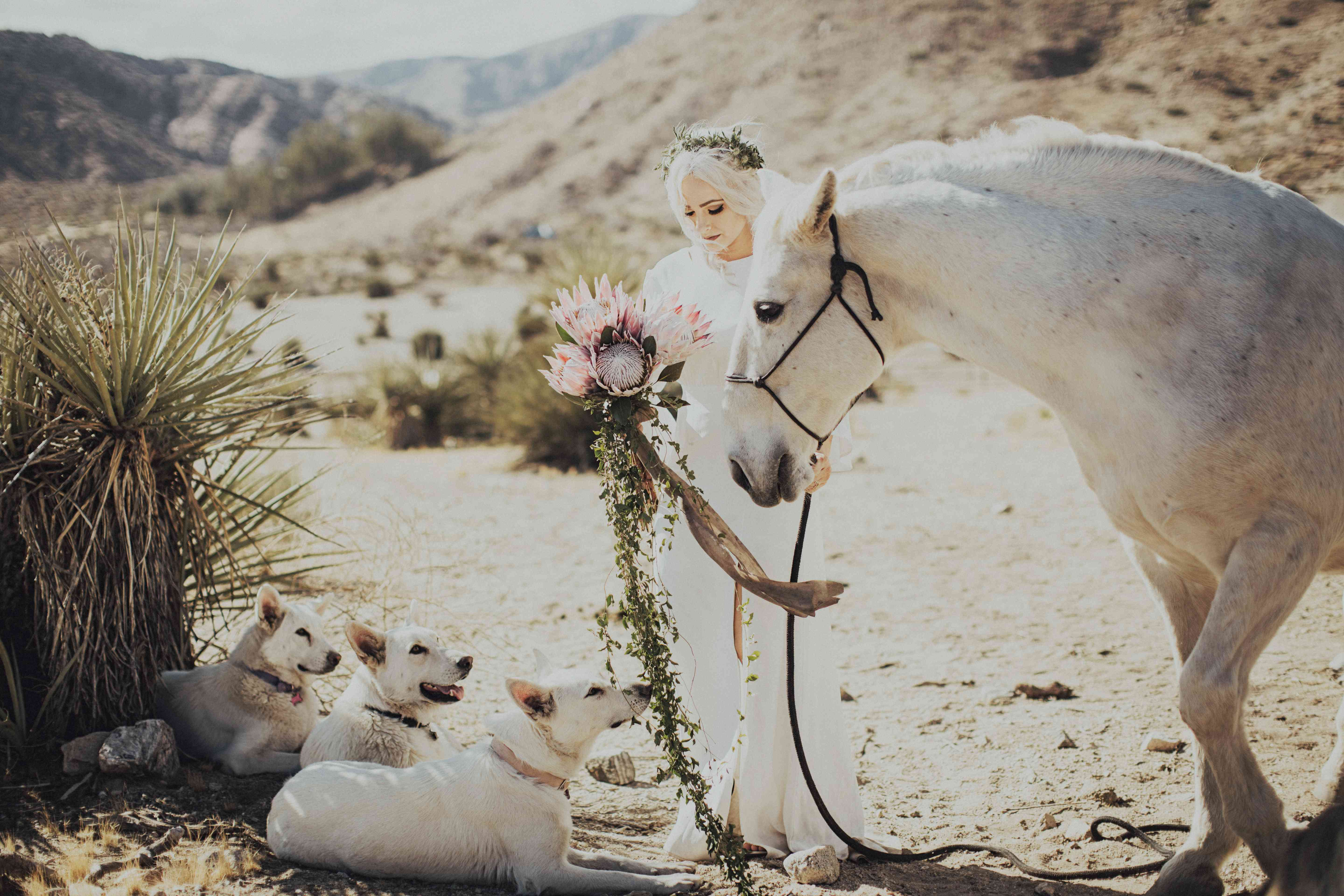 Bride with horse and dogs